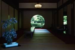 6月の「明月院」であじさいを撮ってきました。 - 写真スポットで撮ってきました。 | かめらとブログ。