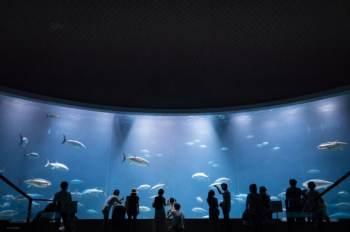 水族館での写真の撮り方とアイデア!明るくないキットのズームレンズとマイクロフォーサーズのカメラで水族館を撮ってみた。